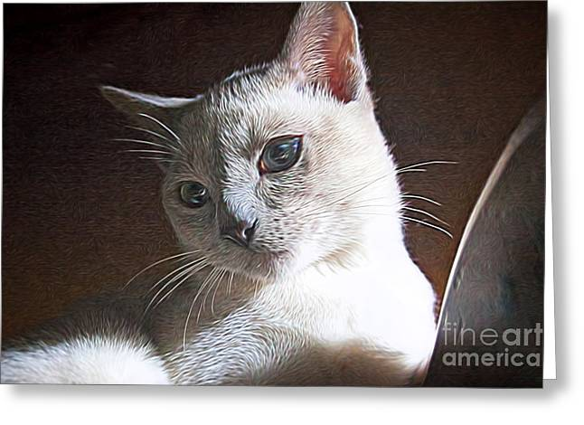 Artistic Kitty Greeting Card by Linda Phelps