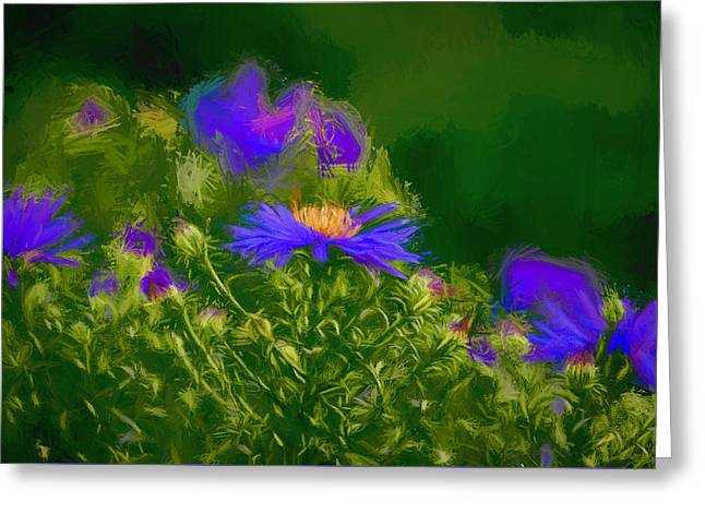 Sunlight On Flowers Greeting Cards - Artistic September aster. Greeting Card by Leif Sohlman