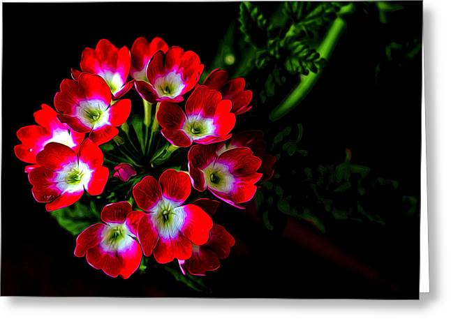 Flower Design Greeting Cards - Artistic Verbena Bonariensis Greeting Card by William Sturgell