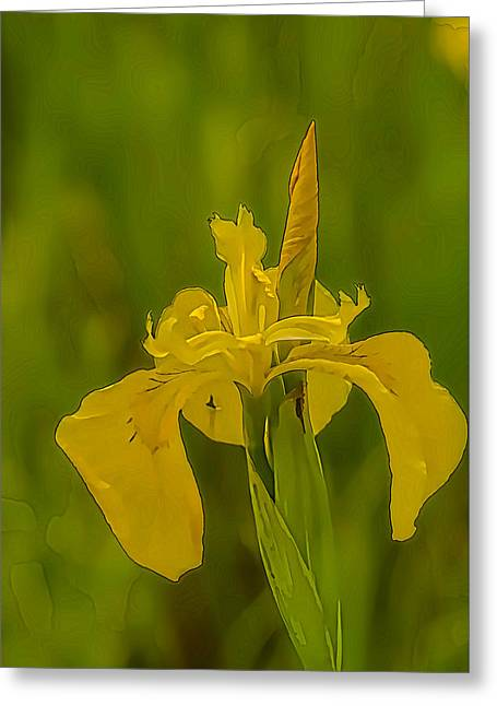 Close Focus Floral Greeting Cards - Artistic Water Flag 2  Greeting Card by Leif Sohlman