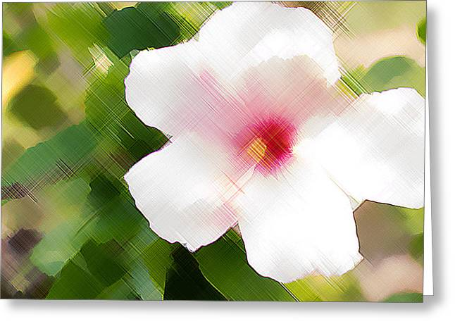 Pinks And Purple Petals Photographs Greeting Cards - Artistic White Hibiscus  Greeting Card by Darrell Hutto