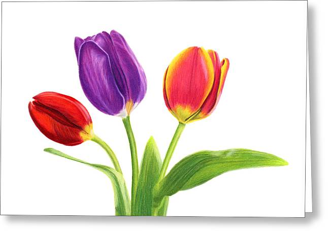 Tulip Trio Greeting Card by Sarah Batalka