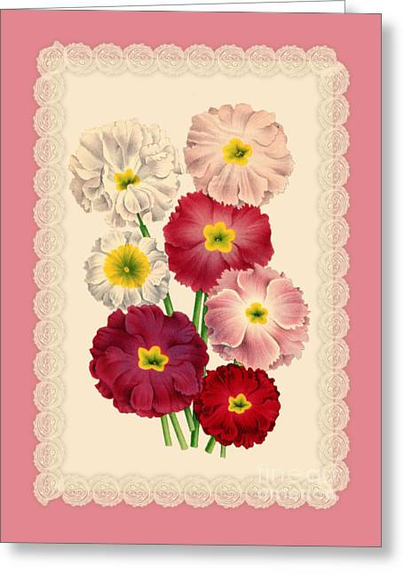 Primroses Drawings Greeting Cards - Primula sinensis la primevere chinoise Greeting Card by Anne Kitzman