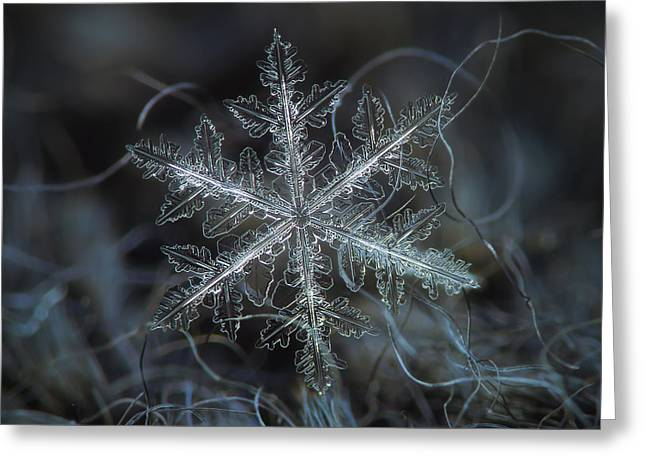 Leaves Of Ice Greeting Card by Alexey Kljatov