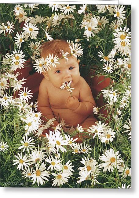 Daisies Greeting Card by Anne Geddes
