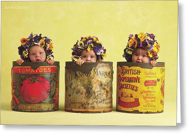 Pansy Tins Greeting Card by Anne Geddes