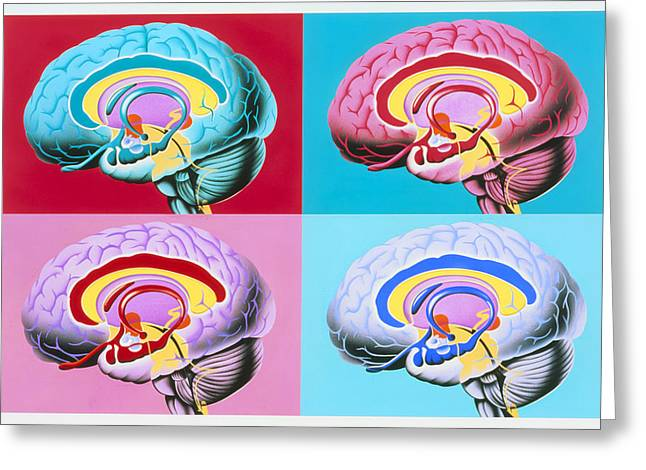 Cns Greeting Cards - Artworks Showing The Limbic System Of The Brain Greeting Card by John Bavosi