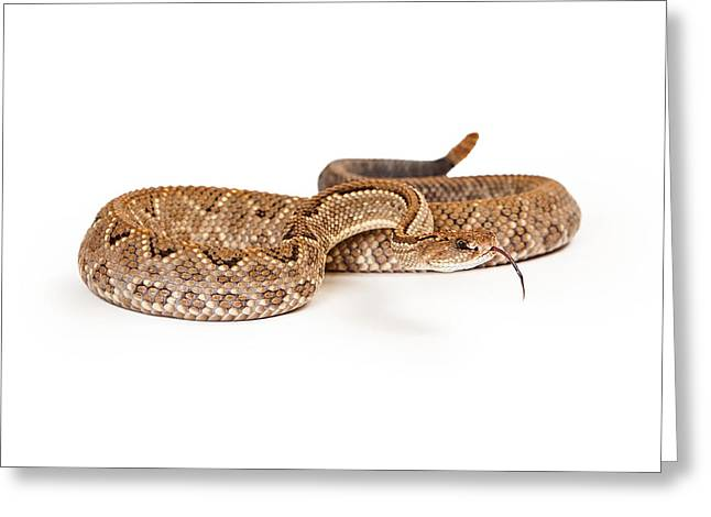 Venezuela Greeting Cards - Aruba Rattlesnake Coiled Tongue Out Greeting Card by Susan  Schmitz