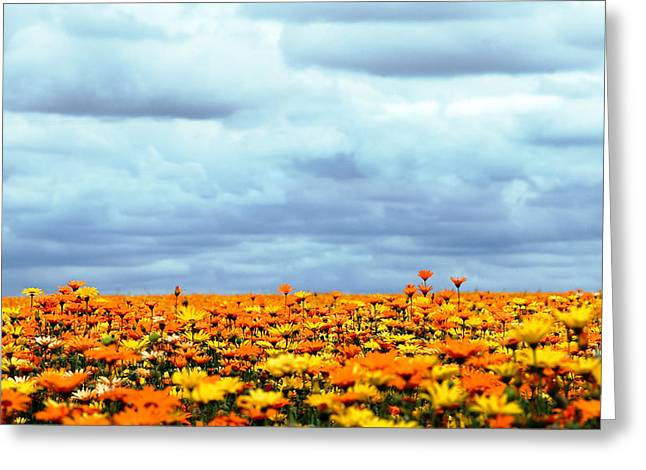 Flowers Photographs Greeting Cards - As Far As The Eye Can See Greeting Card by Rebecca Cozart