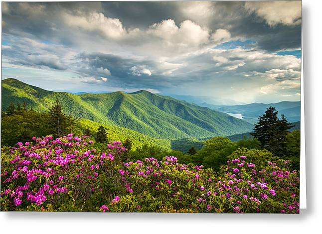 Asheville Nc Blue Ridge Parkway Spring Flowers Greeting Card by Dave Allen