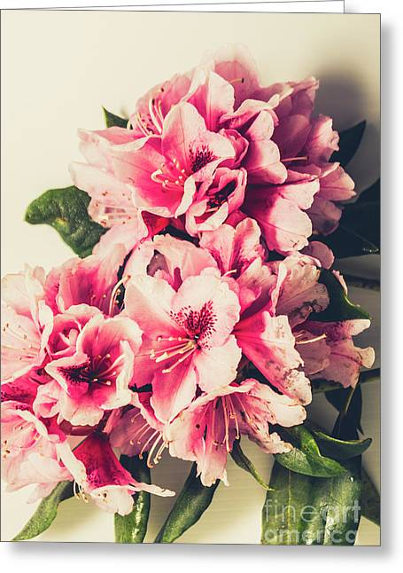 Asian Floral Rhododendron Flowers Greeting Card by Jorgo Photography - Wall Art Gallery