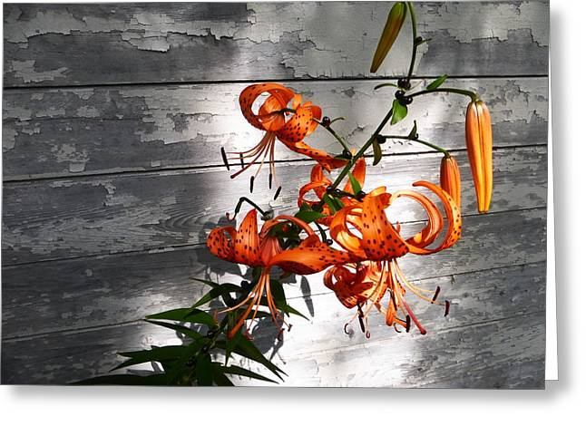 Asiatic Lily 2015 Greeting Card by Tina M Wenger