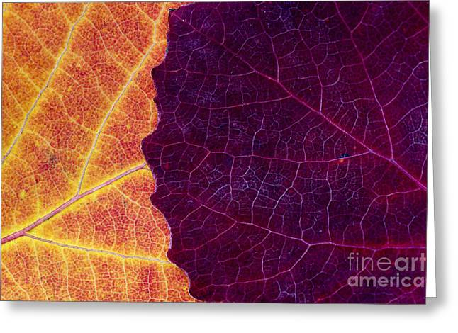 Aspen Abstract Greeting Card by Tim Gainey