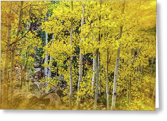 Aspen Autumn Burst Greeting Card by Bill Gallagher