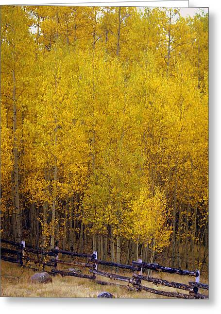 Marty Koch Greeting Cards - Aspen Fall 2 Greeting Card by Marty Koch