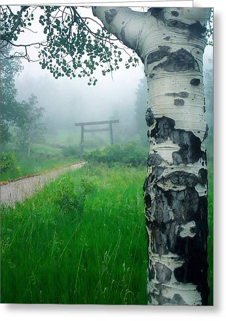 Shinto Greeting Cards - Aspen Gate Mist Greeting Card by Karl Manteuffel