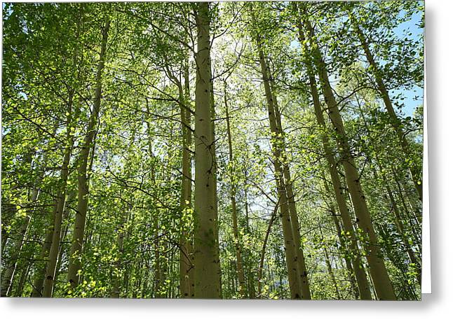 Aspen Green Greeting Card by Eric Glaser
