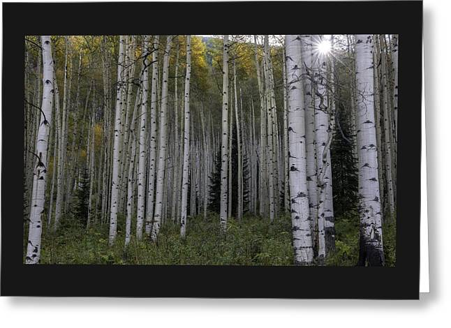 Illuminate Greeting Cards - Aspen Grove and Star Burst Greeting Card by Thomas Schoeller