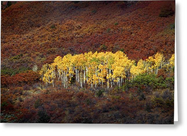Rich Franco Greeting Cards - Aspen Grove Greeting Card by Rich Franco
