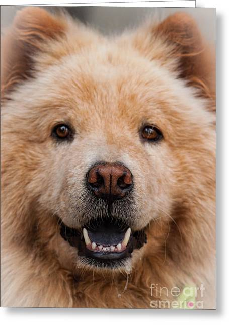 Best Friend Greeting Cards - Aspen I I Greeting Card by ArtissiMo Photography