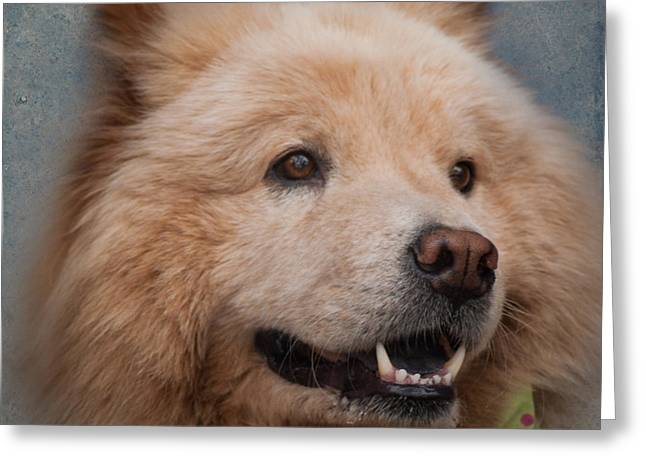 Best Friend Greeting Cards - Aspen in Vail Greeting Card by ArtissiMo Photography