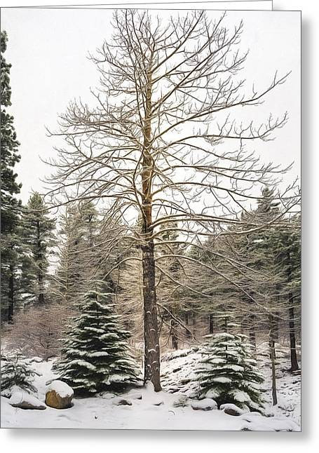 Snowy Day Greeting Cards - Aspen Tree in a Pine Forest Greeting Card by Maria Coulson