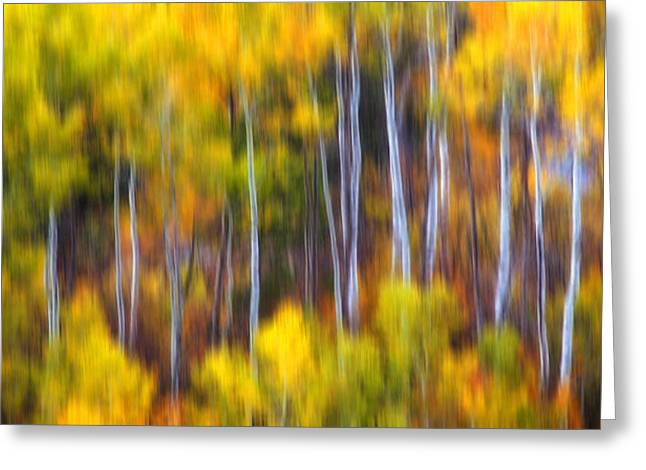 Metal Art Photography Greeting Cards - Aspens Alive Greeting Card by Darren  White