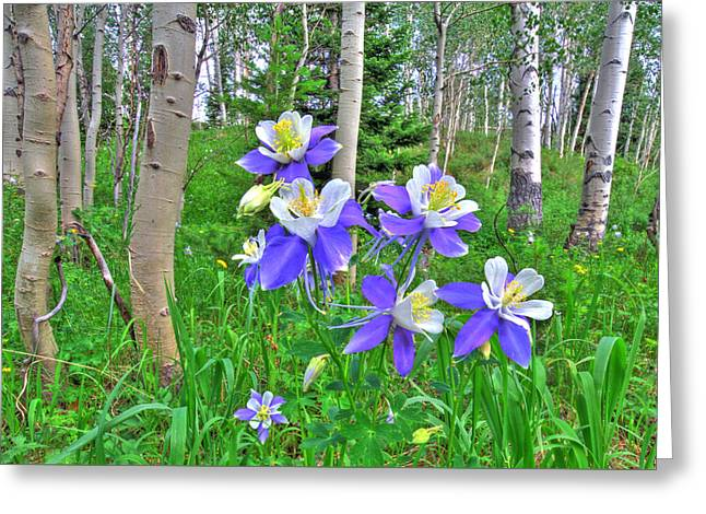 Aspens And Columbines Greeting Card by Scott Mahon
