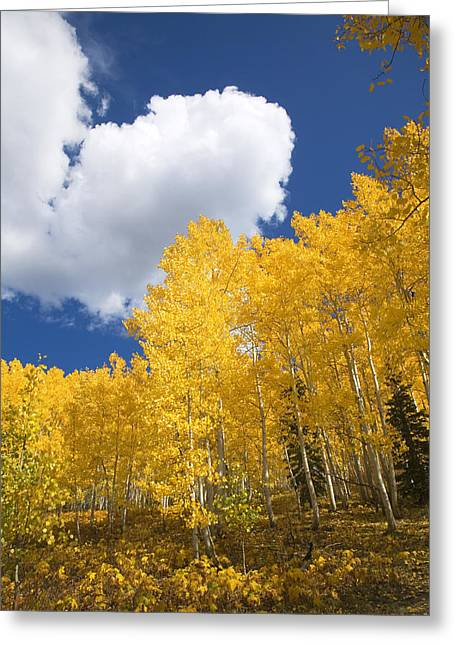 Ron Woods Greeting Cards - Aspens and Sky Greeting Card by Ron Dahlquist - Printscapes