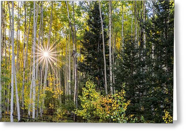 Aspens In Autumn 5 Panorama - Santa Fe National Forest New Mexico Greeting Card by Brian Harig