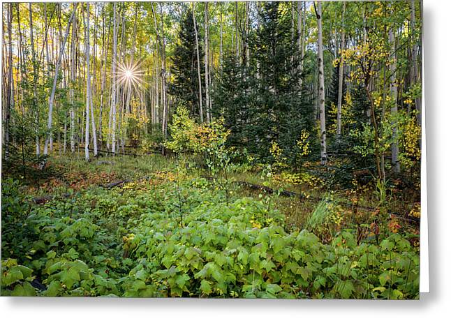 Aspens In Autumn 5 - Santa Fe National Forest New Mexico Greeting Card by Brian Harig