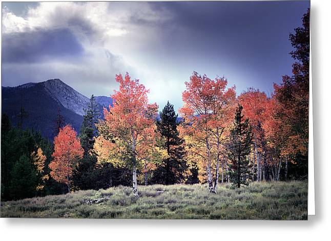 Photos Of Autumn Greeting Cards - Aspens in Autumn Light Greeting Card by Leland D Howard