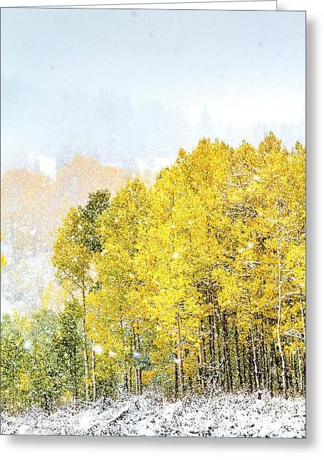 Aspens In The Snow Greeting Card by Teri Virbickis