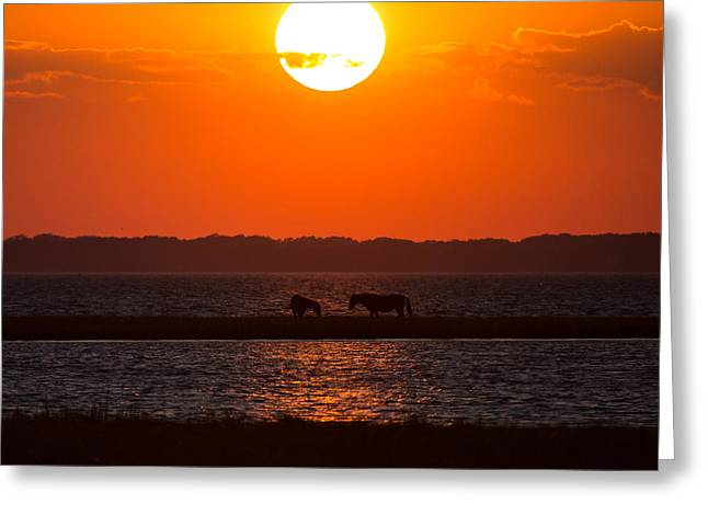 Assateague Wild Horses At Sunset Greeting Card by Flying Turkey