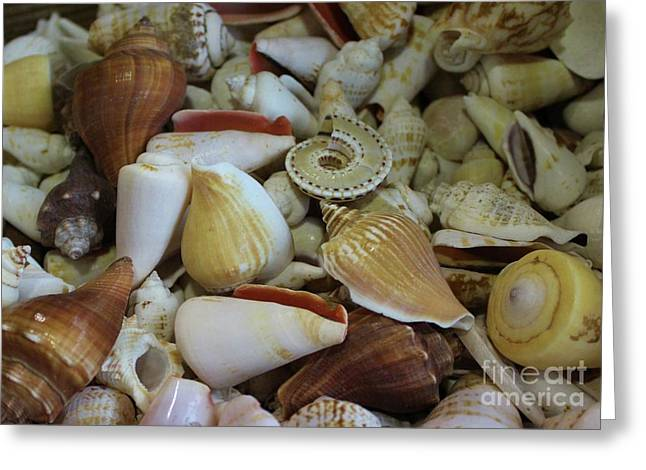 Assorted Sea Shells Greeting Card by Paulette Thomas