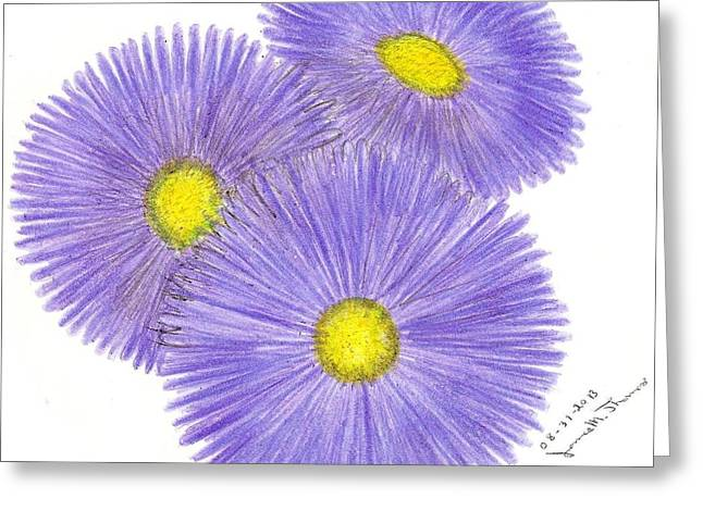 Aster Drawings Greeting Cards - Aster Alpinus Greeting Card by James M Thomas