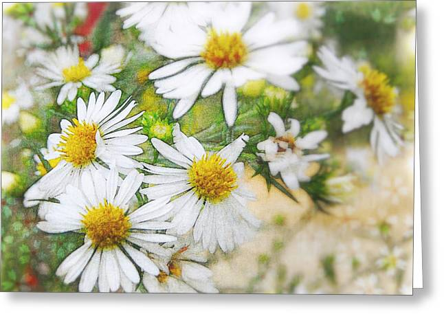 Rebecca Matthews Greeting Cards - Aster Delight Greeting Card by Rebecca Matthews