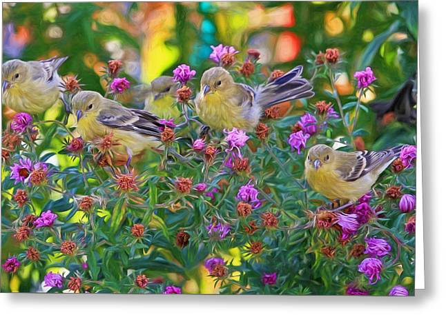 Aster Mania Greeting Card by Donna Kennedy