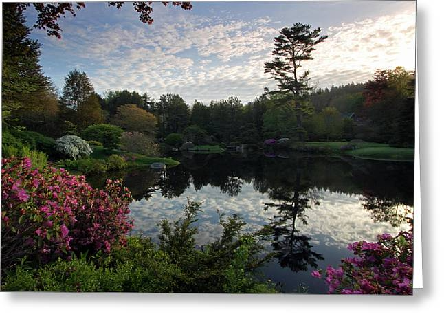 Photo Art Gallery Greeting Cards - Asticou Azalea Garden Greeting Card by Juergen Roth