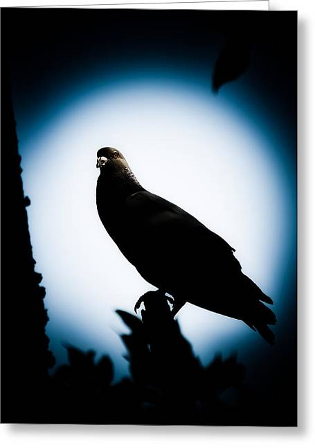 Astral Greeting Cards - Astral Pigeon Greeting Card by Loriental Photography