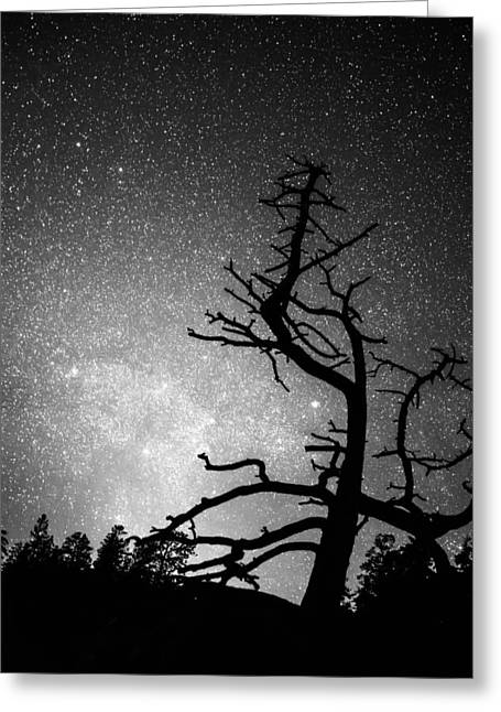 Constellations Greeting Cards - Astrophotography Night Black and White Portrait View Greeting Card by James BO  Insogna