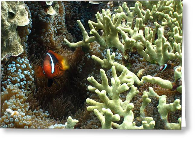 At Home On The Reef Greeting Card by Brian Governale