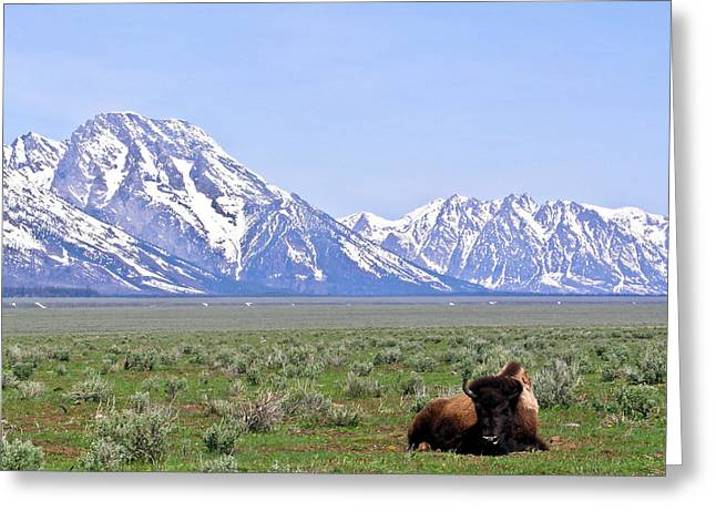 Lonly Greeting Cards - At Rest on the Range Greeting Card by Douglas Barnett