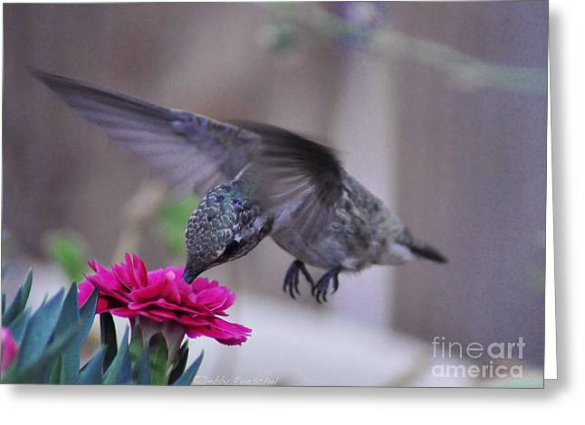 Hovering Greeting Cards - At the Carnation Greeting Card by Debby Pueschel