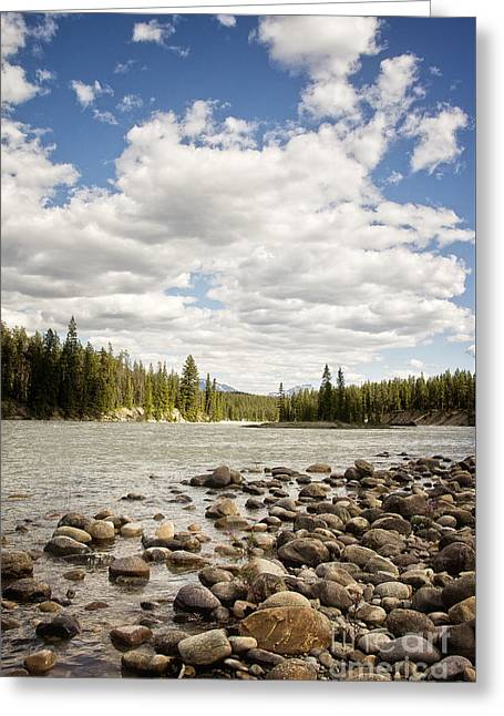 Greeting Cards - Athabasca River bank Greeting Card by Ivy Ho