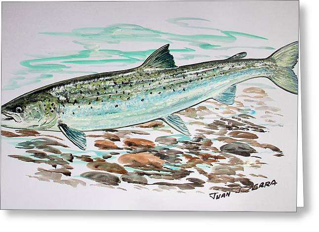 Salmon Paintings Greeting Cards - Atlantic salmon 2 Greeting Card by Juan Jose Serra