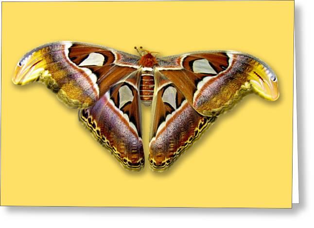 Atlas Moth 2 Sehemu Mbili Unyenyekevu Greeting Card by Bob Slitzan