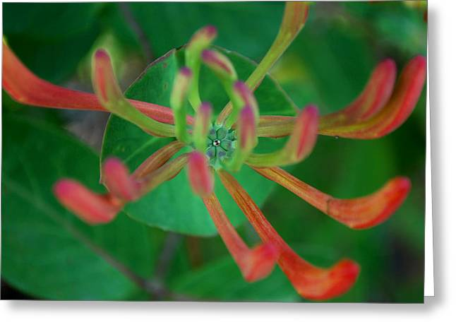 Becky Greeting Cards - #atthestillcenter Greeting Card by Becky Furgason