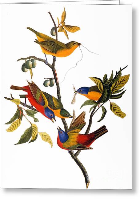 John James Audubon Greeting Cards - Audubon: Bunting, 1827 Greeting Card by Granger