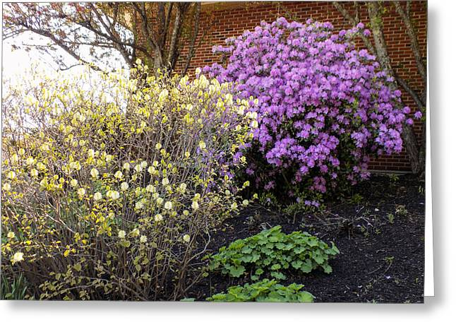 Maine Spring Greeting Cards - Augusta Hotel Landscaping Greeting Card by William Tasker